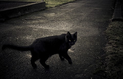 Cemetery pet II (gothicburg) Tags: cemetery grave cat blackcat dark gteborg sweden gothenburg lightroom majorna nikond80 noncoloursincolour mariebergskyrkogrd