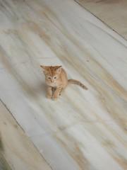 gatito (kiarras) Tags: nature animals cat little kitty gato alhambra granada pequeño marmol