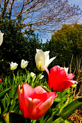 spring is here... (rbyers_nc) Tags: flowers spring northcarolina tokina1224 raleigh rsgmeetup canon40d