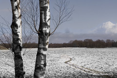 Winterspring.. (MaureenduLong) Tags: snow spring maureen assen waterwingebied