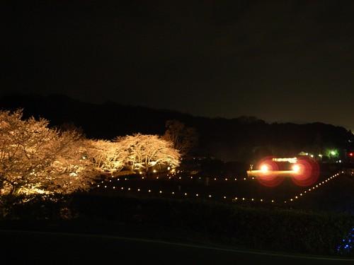 石舞台古墳(夜桜)-09