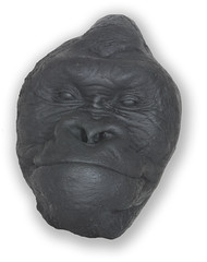 chimpanzee death mask (greyherbert) Tags: face death zoo mask chimp chimpanzee mold lifecast deathcast pimate zoofire