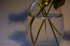 """pausa"" (Tinta China2007) Tags: luces agua corte colores cristal sombras miedo reflejos esencia pausa transparencia minerales blenda tallos benedetti luminosa cabellos medusas"