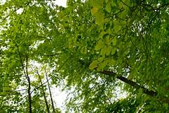 Hiking the Victoria Trail  5/13/09 (bpahles) Tags: tamron1750 digitalrebelxti