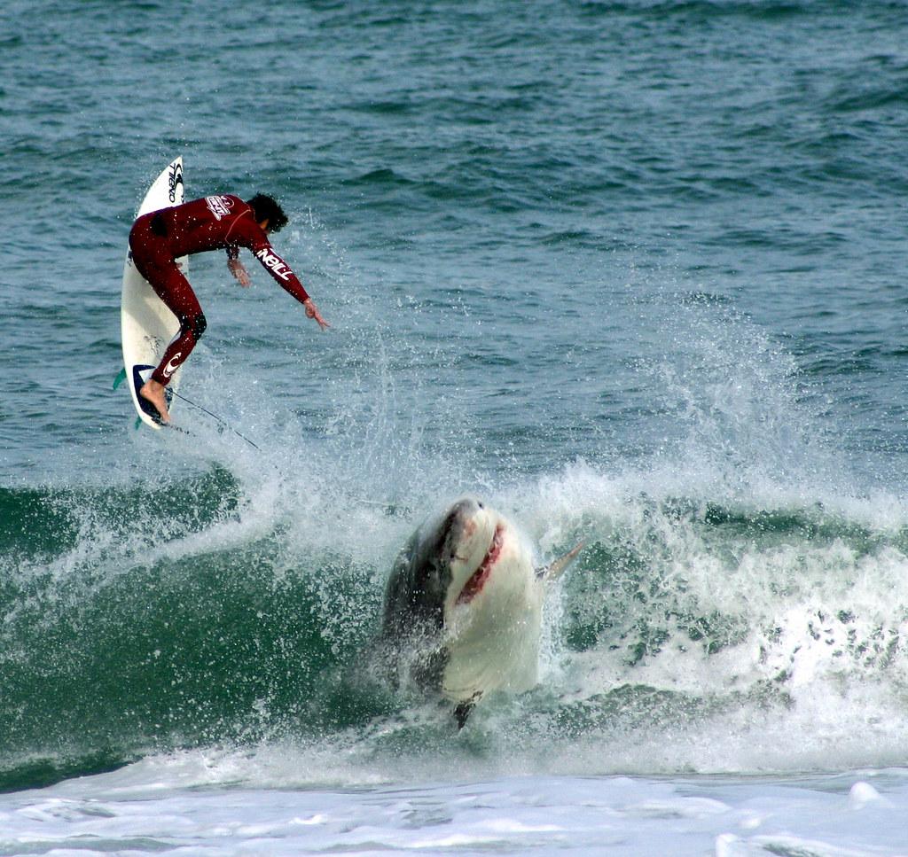 shark-vs-surfer