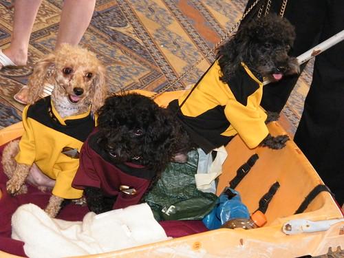 Starfleet Poodles