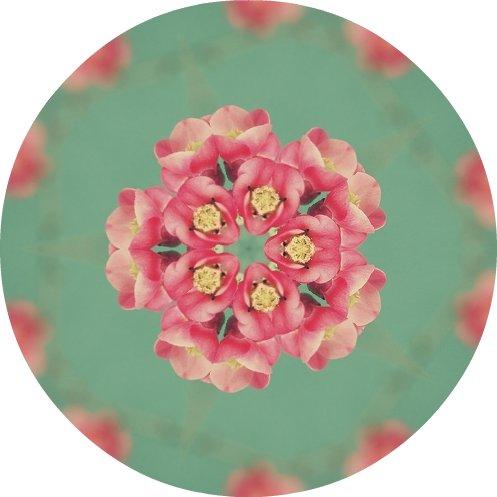 spring branch kaleidoscope