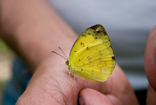 A butterfly on a hand