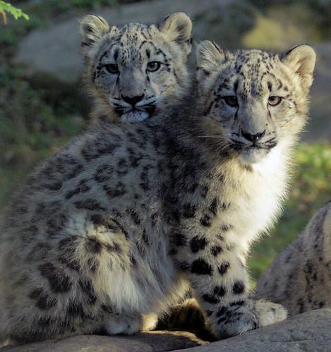 Kazi and Maya