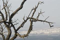 Vista de Osuna desde las Viñas una tarde de otoño II (Benjamín SL) Tags: naturaleza sevilla otoño molinos viñas osuna eólicos madroños espaa naturalezaosunaviasmadroñosparqueelicogomeraatardecerc