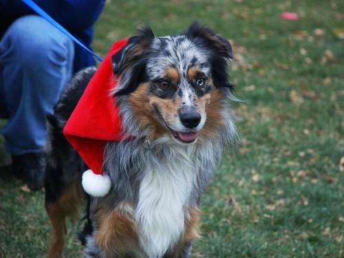 Reindog 4: Pretty pup!