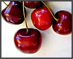 Our Garden Berlin:  tasty cherries   13.1028.18 (Juergen Kurlvink) Tags: voyage trip travel red summer vacation plant berlin rot nature fruit germany garden dark geotagged deutschland cherries europa europe tour sommer urlaub natur pflanze eu tasty 2006 fresh summertime frucht ourgarden allemagne garten ferien dunkel reise darkred frisch lecker spandau brd cherrie kirsche juergen bln kirschen encarnado kladow unsergarten dunkelrot magicofaworldinmacro 0fav theperfectphotographer superperfectphotographer kurlvink naturemasterclass kurli1 0allok 0nah 0win