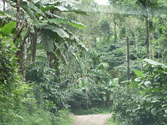 JUNGLE (Steve Southerland) Tags: india kerala jungle wyanad stevesoutherland ringvenroel