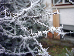 Spikes (dididumm) Tags: winter cold ast frost branch hoarfrost spike rime kalt raureif winterwonderland kälte zweig winterwunderland