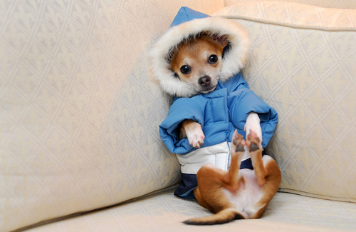 Puppy dressed for winter