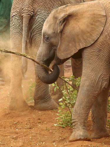 Elephant Dust