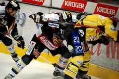 Peace and love (lyonora) Tags: ice hockey sport crash swiss tiger player svizzera lugano ghiaccio pattinaggio palaghiaccio scontro resega giocatoridihockey viulenzaa