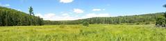 Second Pond Meadow (Upstate Dave) Tags: adirondacks siamesepondswilderness secondpondmeadow