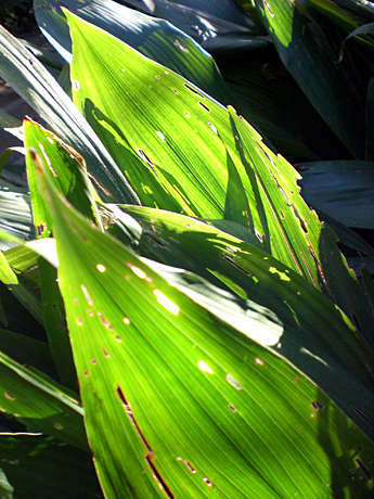 palm-leaf-valencia
