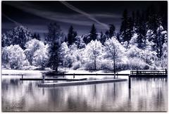 infra-red Klineline pond (jodi_tripp) Tags: nature vancouver landscape pond digitalart infrared klineline washongton joditripp challengeyouwinner wwwjoditrippcom photographybyjodtripp