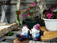 garden elves