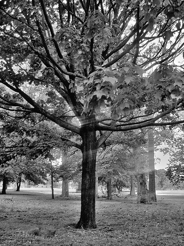 black and white tree photos. lack and white tree.