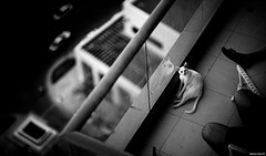 First Breath After Coma | 146.365 (Stephan Geyer) Tags: ef85mmf12lusm 85mm 85l canoneos5d canon5dclassic 8512 canon5d 5d canon cat balcony neighbour bw blackandwhite blackwhite monochrome candid contrast bokeh dof
