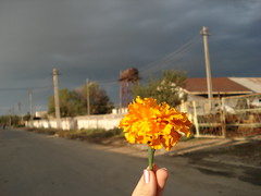flower (Ramo_niKa) Tags: street orange storm flower hand loveit