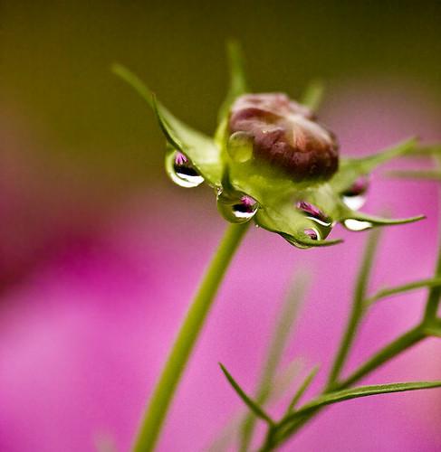 rainy_cosmos