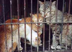 Kinship Circle - 2007-10-29 - 02 - Korea - Stop Eating Cats And Dogs