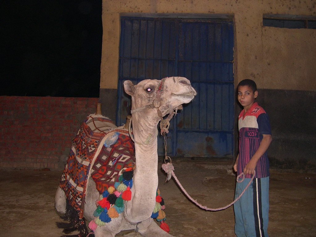 Camel and Kid