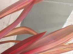 (my.third.eye) Tags: pink red plants color texture nature leaves leaf gray urbannature walls coleus naturesart pinkandgray colourartaward