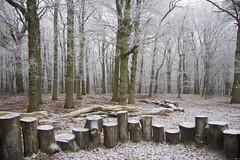 Winter (siebe ) Tags: winter snow cold holland dutch sneeuw nederland thenetherlands koud hollandstock