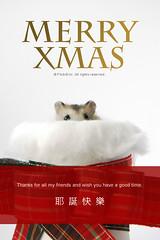 XMAS CARD -2 (EricFlickr) Tags: christmas xmas pet pets cute animal animals taiwan hamster 耶誕 倉鼠