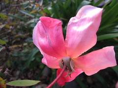 Pictures from Anna Lisa's garden in Orinda