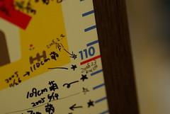 5日で1.5cm伸びるヤツ / Height grew at 1.5cm in five days