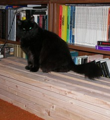Kat on wood