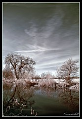 Stroudwater Canal Infra Red. (numanoid69) Tags: winter cold reflection water ir canal frosty gloucestershire infrared icey hoyar72 stroudwatercanal avision channelswapped nikond300