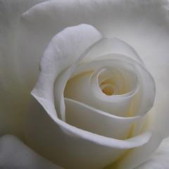 blanche / white 1
