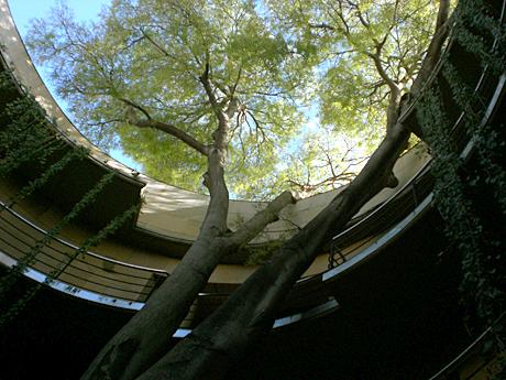 garden-botanic-valencia