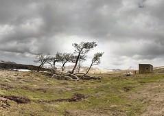 Col de la Croix-Morand - 06-04-2008 - 12h35 (Panoramas) Tags: trees panorama snow france tree montagne de landscape geotagged vent la wind central perspective ciel arbres rbol neige paysage landschaft rvore col auvergne dyane ptassembler massif dsol etiennecazin 1401 mtres smartblend  croixmorand tiennecazin geo:lat=45596395 geo:lon=2849670