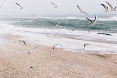 Against the wind (odwalker) Tags: beach birds blacksea blizzard cold fly gloomy landscape nature outdoor outside pattern sand sea seagulls snow snowfall wind winter