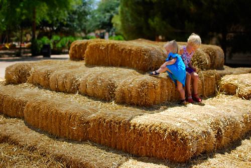 haystack-0094