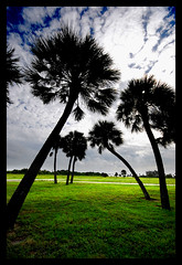 Angled Palms at Ft. DeSoto (<  Ad   >) Tags: sky grass silhouette palms stpetersburg florida cloudy ad aadil stpete fortdesoto ftdesoto sigma1020mm specnature nikond80 superbmasterpiece adpod diamondclassphotographer