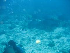 IMG_2479 (dcgreer) Tags: malaysia pulau redang pulauredang
