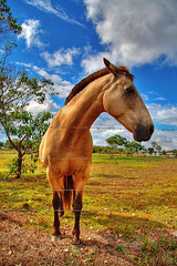 Horsing around with HDR (Tanya Puntti (SLR Photography Guide)) Tags: horse nature animal canon bluesky hdr highdynamicrange naturesfinest photomatix flickrsbest mywinners canon400d hdranimal hdrhorse