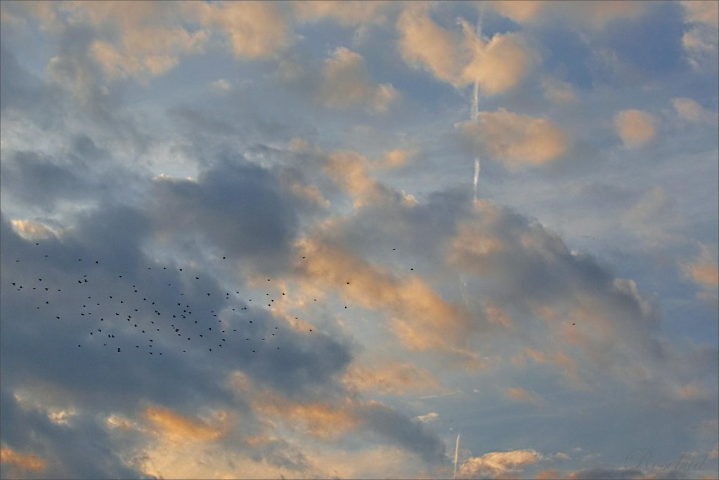 birds|sunset ©2007 RosebudPenfold