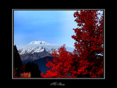 Mt. Shasta in the fall (D.O'Brien) Tags: mtshasta obrien california flicker fall snow clouds tree red mountains volcano skiing mountshasta denise flickr dobrien deniseobrien deniseatkin