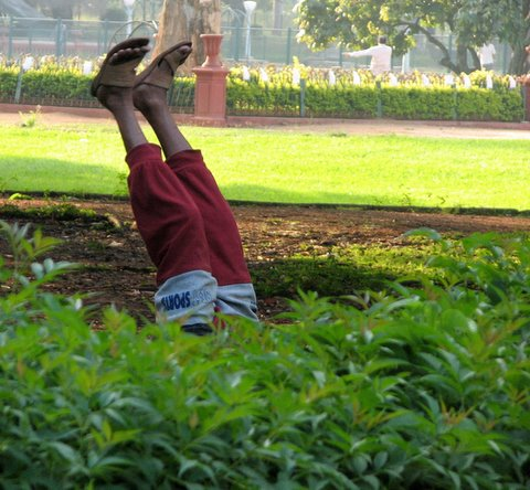 yoga in lalbagh