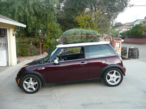 tree on the MINI